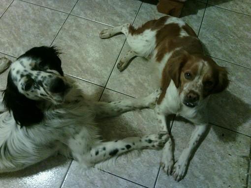 Stella, ritrovati i due cani da caccia dispersi
