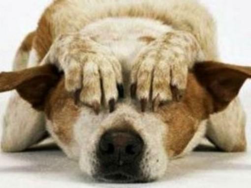 Attenzione ai botti di fine anno: le raccomandazioni di Enpa per proteggere gli animali