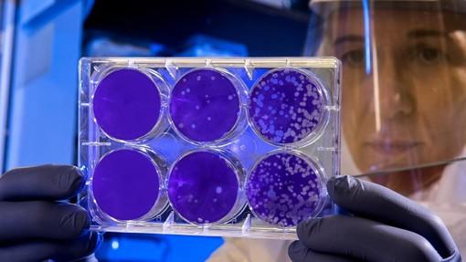 Emergenza Coronavirus: forte calo dei positivi in Liguria, nelle ultime 24 ore due morti in tutta la regione