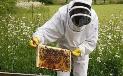 A Savona un corso di apicoltura