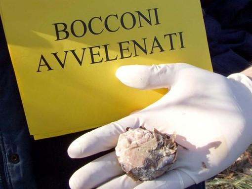 Bocconi avvelenati tra Boissano e Toirano, l'allarme corre sui social