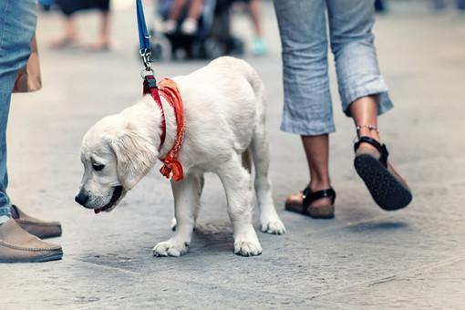 Deiezioni canine e conduzione dei cani nei luoghi pubblici: il sindaco di Carcare emana un'ordinanza per disciplinare la materia