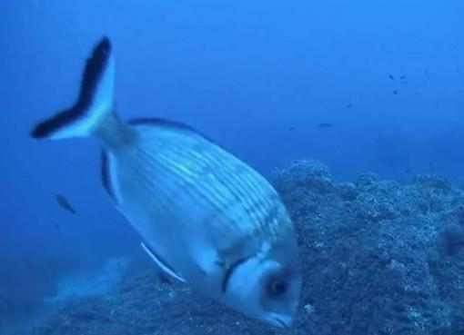 """L'appello dell'Enpa Savona: """"Rispettate il mare e le sue creature"""""""