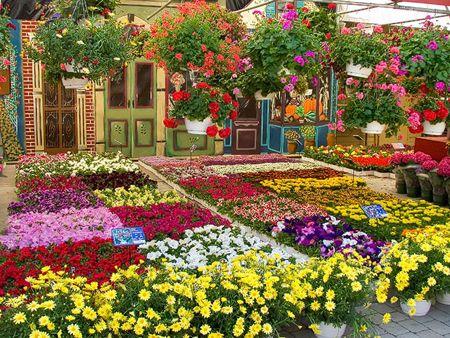 Fiori estivi per balconi e giardini colorati e vivaci leitv