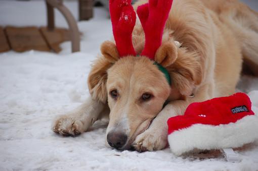 Savona, botti e fuochi d'artificio per Capodanno: la preoccupazione degli animalisti