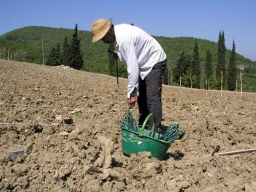 Effetto crisi, da cittadini a contadini: al posto della casa si comprano terreni