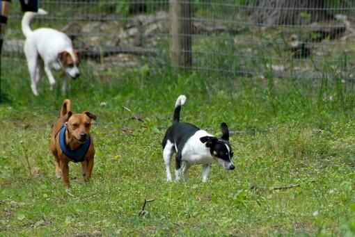 """Celle, una raccolta firme per richiedere una nuova area canina: """"Chiediamo al sindaco uno spazio fruibile"""""""