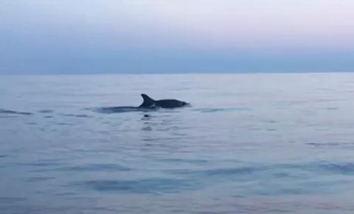 Vaso con delfini ceramiche artistiche molaroni