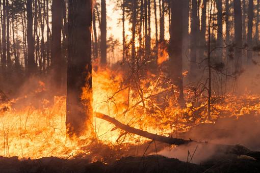Incendi boschivi: dalla mezzanotte del 20 marzo scatta lo stato di grave pericolosità in Liguria