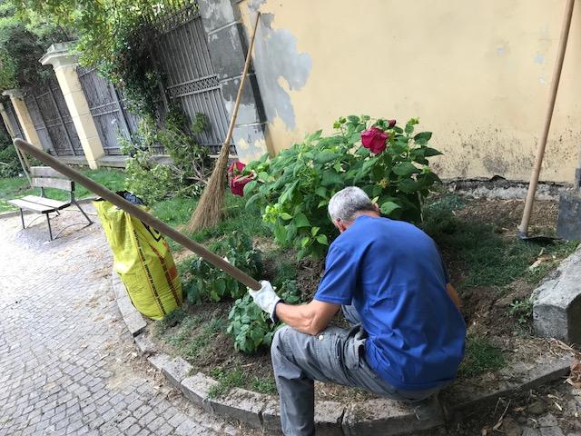 Ufficio Verde Pubblico Trieste : Albenga interventi di manutenzione e decoro e verde pubblico