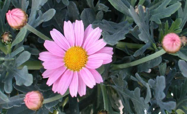 convegno ad albenga sulla floricoltura biologica
