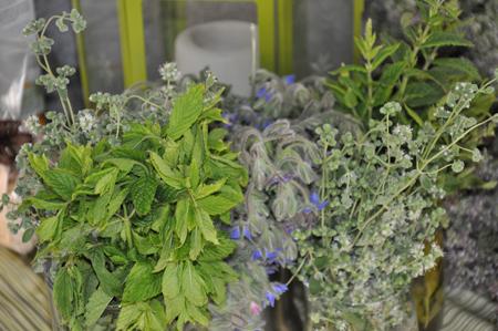 Piante aromatiche e margherite albenga debuttano alla - Porta piante aromatiche ...