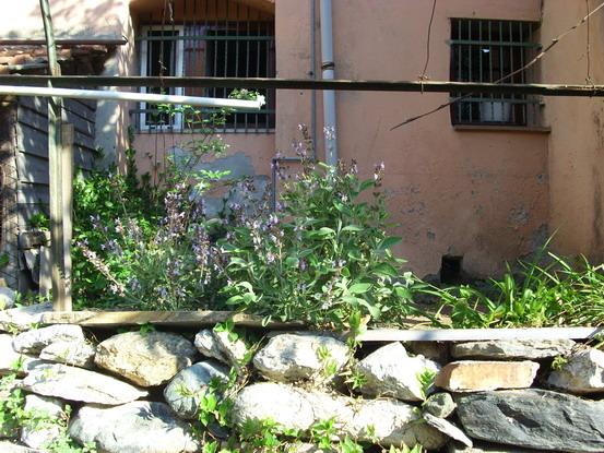 Coldiretti: con le piante aromatiche al posto del sale in cucina ...