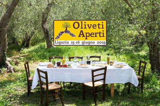 """Turismo esperienziale: alla scoperta dell'oro ligure con """"oliveti aperti"""""""