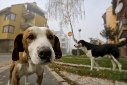 Albissola, obbligo della bottiglietta d'acqua anti deiezioni per i proprietari dei cani