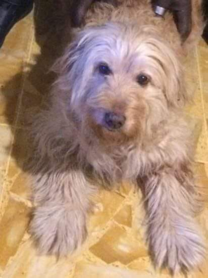 Botti Di Fine Anno Boom Di Animali Smarriti In Provincia Di Savona