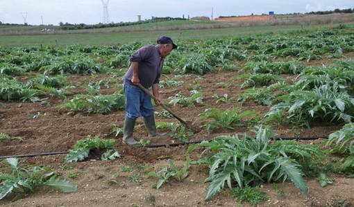 La Fondazione della 'Riviera dei Fiori Onlus' acquista una tenuta agricola per dare lavoro