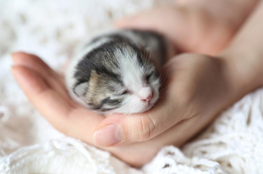 Amato Gatti piccoli: che cosa possono mangiare? - Savonanews.it NV84