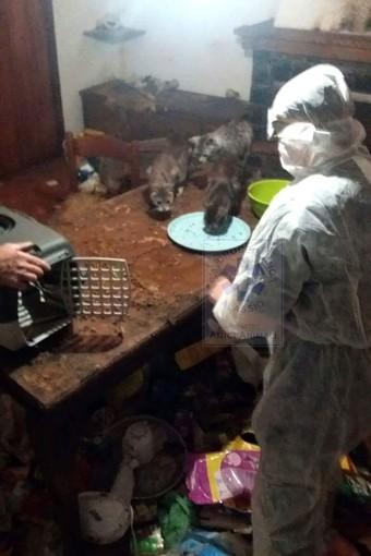 """Accumulatore seriale viveva in una casa """"discarica"""" con i suoi 15 gatti. Animali salvati, appello per aiutarli"""