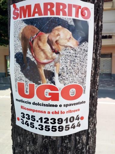 Albenga: continuano le ricerche di Ugo smarrito ormai oltre 10 giorni fa