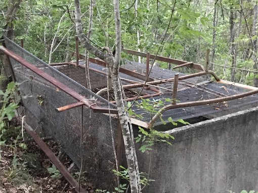 Cerbiatto salvato ad Ortovero, la vasca è stata messa in sicurezza (FOTO)