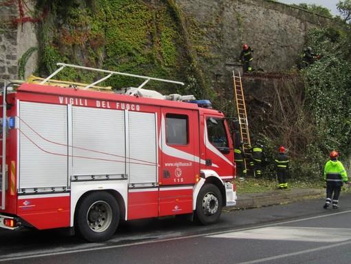 Il maltempo si abbatte sulla nostra provincia: a Savona un albero crolla nei pressi della via Aurelia (FOTO)