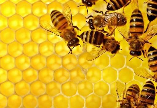 Anno amaro per il miele: in Liguria produzione zero