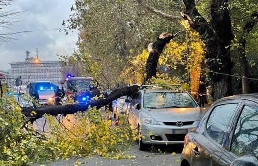 Savona, albero cade in via XX Settembre: problemi al traffico (FOTO)