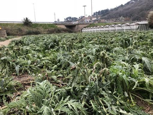"""La Coldiretti: """"No ai tagli per 4 milioni destinati al mondo agricolo ligure"""""""