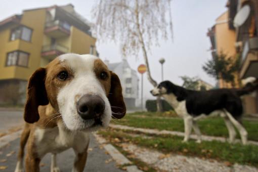 Cairo, i cani protagonisti della campagna anti-deiezioni: i cittadini potranno inviare la foto del proprio amico a 4 zampe
