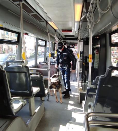 Le Polizie locali di Albenga, Loano e Finale controllano i bus con l'ausilio delle unità cinofile