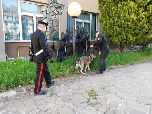"""""""Scuole sicure"""": il cane """"Artur"""" dei Carabinieri Cinofili veglia su Carcare"""