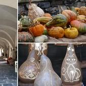 Zuccarello si tinge di arancione: Fiera della Zucca il 31 ottobre con stand gastronomici e attrazioni