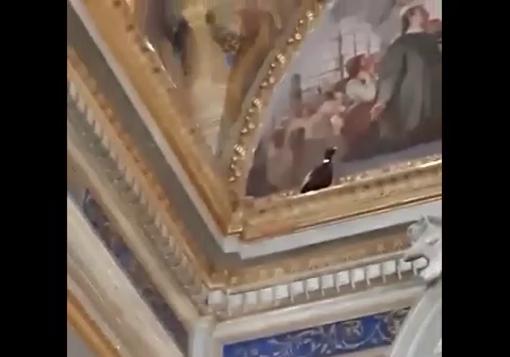 Varazze, fagiano 'si perde' nella chiesa di Santa Caterina: soccorso dai volontari dell'Enpa (VIDEO)