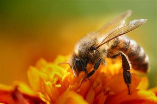 Savona, sabato 16 febbraio un incontro dedicato all'apicoltura con il Dottor Daniele Alberoni