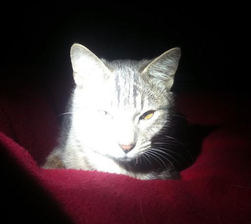 Sono tempi duri per i gatti dell'albenganese