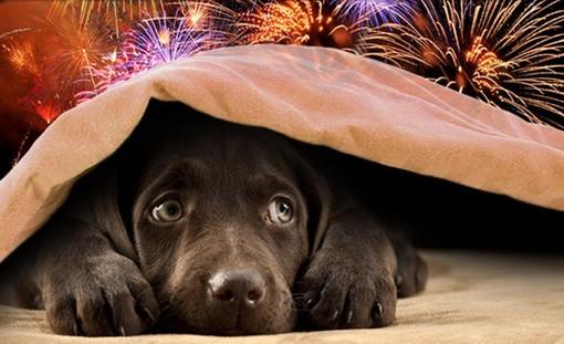 Enpa pubblica un decalogo per proteggere i propri animali dai fuochi d'artificio