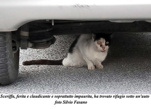 """Nella galleria fotografica di Silvio Fasano tutti i momenti del salvataggio di """"Sceriffa"""""""