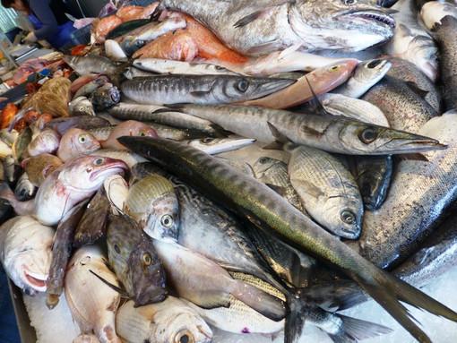 Spotorno, pesce fresco 'a km 0' sul terzo molo