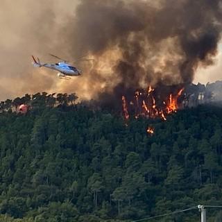 """Incendi, Coldiretti Savona: """"Si contrasti l'abbandono dei territori per tutelare il patrimonio boschivo"""""""