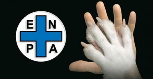 """Enpa: """"Con il caldo animali domestici a rischio"""""""