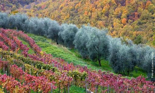 Albenga: i colori e il duro lavoro dei contadini della piana impresso nelle immagini di Luciano Rosso