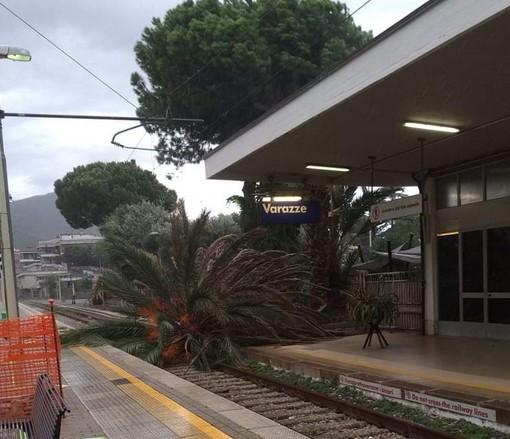 Varazze, crolla una palma alla stazione ferroviaria (FOTO)