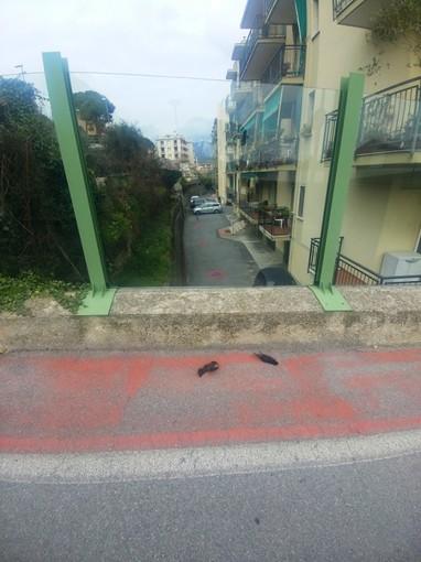 """L'ENPA Savona: """"Le barriere antirumore letali per gli uccelli"""""""