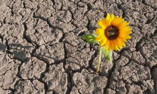 Venerdì con... #Immaginafamiglie: Resistenza, resilienza, crescita attivata dalle avversità