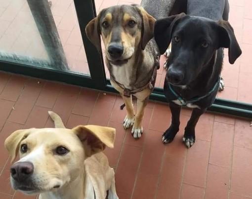 Albenga: Flavio, Selina e Shaki cercano una famiglia