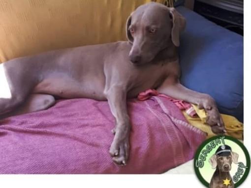 Leca d'Albenga: aiutateci a ritrovare Dea