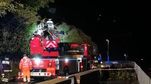Finale Ligure, albero caduto causa maltempo: Aurelia chiusa