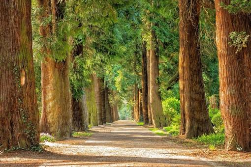 Nuovi modi per garantire il benessere degli alberi