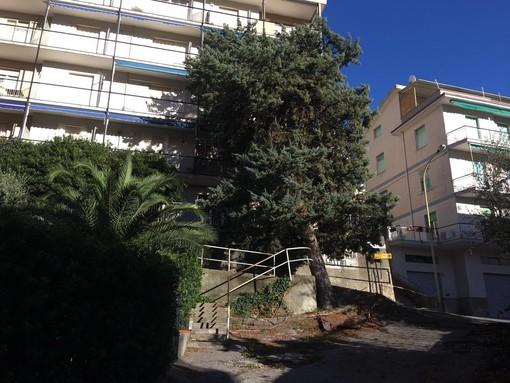 """Celle Ligure: albero si """"appoggia"""" su condominio in via Lanza"""